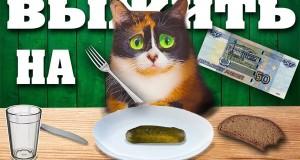 Правильное питание за 50 рублей в день